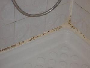 Skimmelsvamp på badeværelse